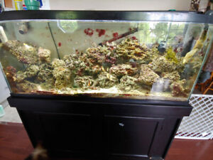 Saltwater Tank | Kijiji in Ottawa  - Buy, Sell & Save with