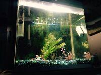 Fish tank with 13 fish
