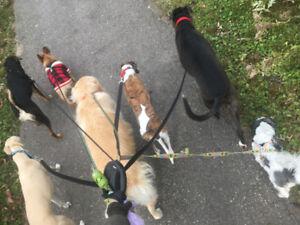 TLC/puppy visits/walking in Durham