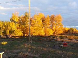 Subdividable Acreage in Westlock County