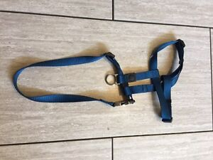 Brand new harness for small dog