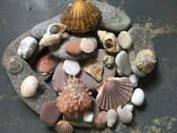 Mullaghroe Beach Stones and Shells