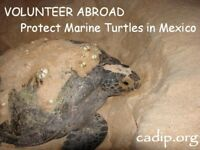 Turtle conservation in Mexico