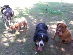 Birchview Dog Boarding -just 30 mins from south end of Cambridge Cambridge Kitchener Area image 8