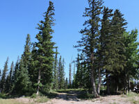 Hinton, AB- Treed lot available for bldg backing onto Greenspace