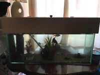 2 1/2 foot fish tank