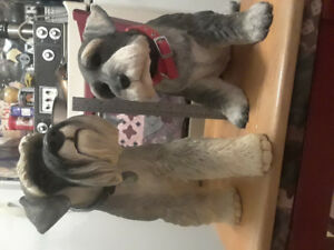 Country Artist  -  Statues - Schnauzers