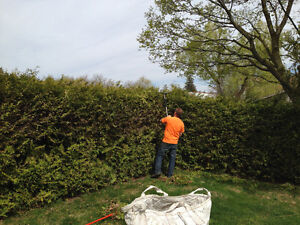 Lawn care & property maintenance services Kitchener / Waterloo Kitchener Area image 6