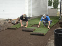 Need Sod? Have a landscaping certificate from your builder?