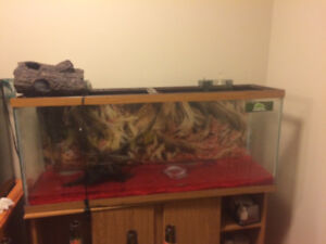 55 gallon tank 2 filters and a heater