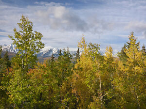 2 Scenic Lots in Haines Junction