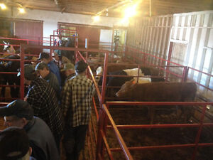 LAWRENCETOWN CATTLE SALE