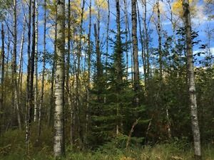 1/4 Section fully treed land for rent