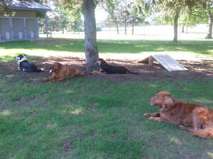 Birchview Dog Boarding - 30 mins from south end of Cambridge Cambridge Kitchener Area image 10