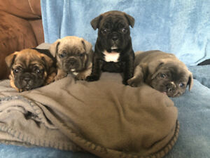 Under $500 | Adopt Dogs & Puppies Locally in Edmonton Area