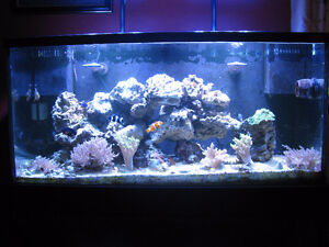 Saltwater corals, liverock and reef sand for sale