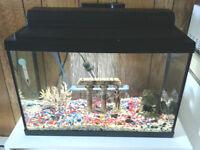 superbe aquarium 20 gallon tout équipé 180 ferme
