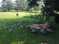 24 Goose Decoys & 2 Layout Blinds $600