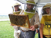 Integrated Pest Management for Beekeeping