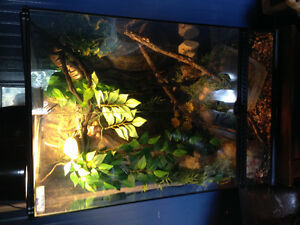 Male ball python and enclosure
