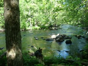 Moira River Wooded 2.7 acre lot