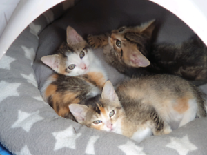 Adorable kittens for good home