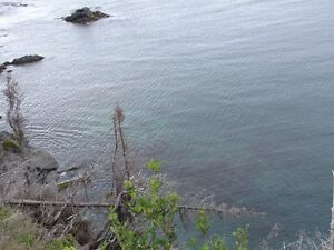 REDUCED !! 3 Acres for a  prime ocean front Residence  Deal !! St. John's Newfoundland image 6