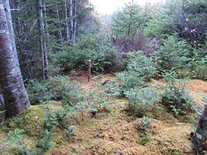 82-94 RIDGE ROAD, CHAPEL'S COVE..2 ACRES St. John's Newfoundland image 8