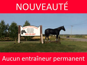 Pension chevaux Rive-Nord - Ranch la Renaissance