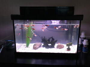 10 gallon fish tank with heater filter and 20 guppies fish