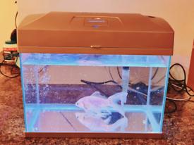 Goldfish with Aquarium for sale