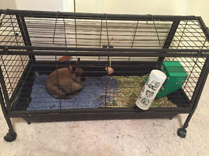 Bunny, cage and supplies for sale