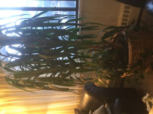 Free plant for pick up only