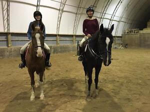 Horseback Riding Lessons *Limited Spots*