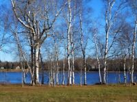 BUILDING LOTS FOR SALE ALONG THE RICHIBUCTO RIVER