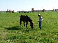 Sierrah Acres Equine Assisted Personal Development