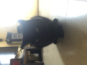 Female black cat looking for a new home