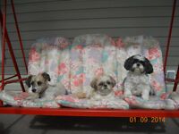 ARF-AN-ACRE LI'L PUPS BED AND BOARD