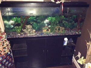 Fish/aquarium