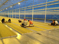 Summer Student Positions available - Propagation Greenhouse