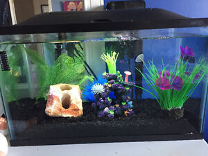 10 Galon Fish Tank with all accessories