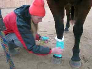 Equine First Aid Courses Winter/Summer