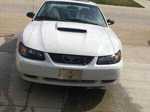 2004 Ford Mustang 3.9L V6 40 th anniversary Coupe (2 door)
