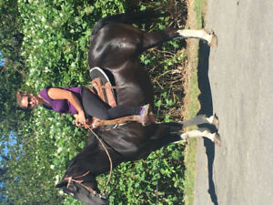 Quarter horse paint mare black and white 20years old