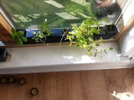 Hydroponic herb & plant growing system