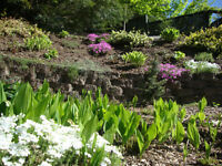 GARDEN PLANTS; purple and yellow irises,hosts,automn joy,primula