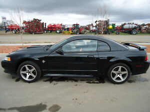 1999 Ford Mustang GT SHOWROOM SHAPE