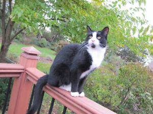 Black & White Cat Missing from Stoney Creek Battlefield Area