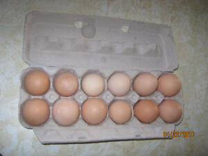 Fresh brown eggs from free range chickens