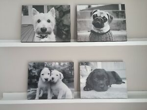 PUPPY PICTURES FOR SALE!!!